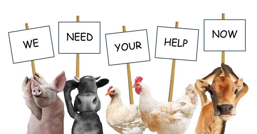 Help protect animals in Algeria